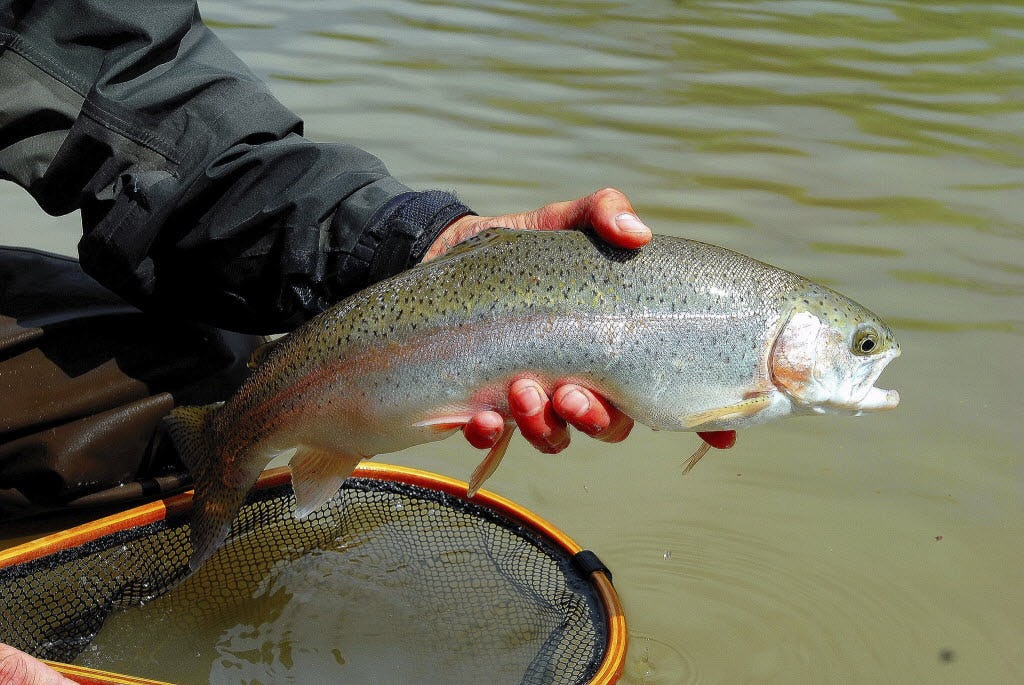 Outdoors notebook: Trout fishing brings them to the Guadalupe