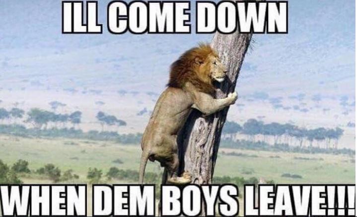 1482817986 lmeme10 dallas cowboys the 15 funniest memes from cowboys lions,Lions Meme