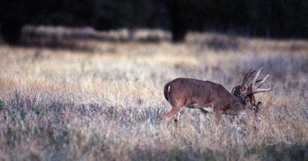 Other Sports The Dos And Donts Of Deer Hunting Season In Texas